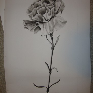 Carnation (charcoal)